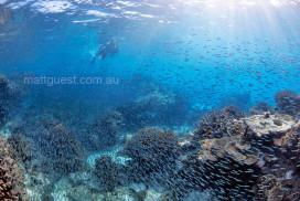 Snorkellers swim amongst Baitfish
