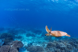 Green Turtle Reef