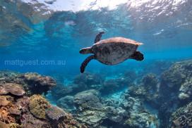 Hawksbill Turtle Reef