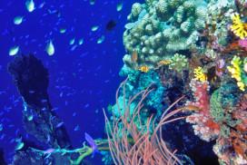 Coral Reef Dreamland