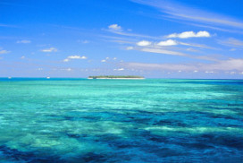 Lady Musgrave Island Reef