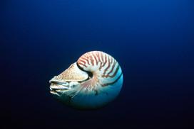 Nautilus Profile